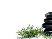 Rosmarino, gli usi in Fitoterapia e aromaterapia. Le pillole della Dott.ssa Badessa.