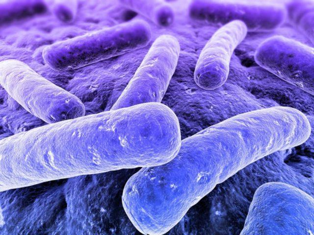 Studi recenti suggeriscono che i cambiamenti nella flora intestinale potrebbero svolgere un ruolo nella comparsa di numerose malattie.